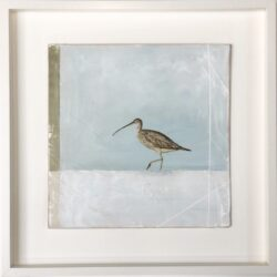 Curlew bird painting on a grey green background